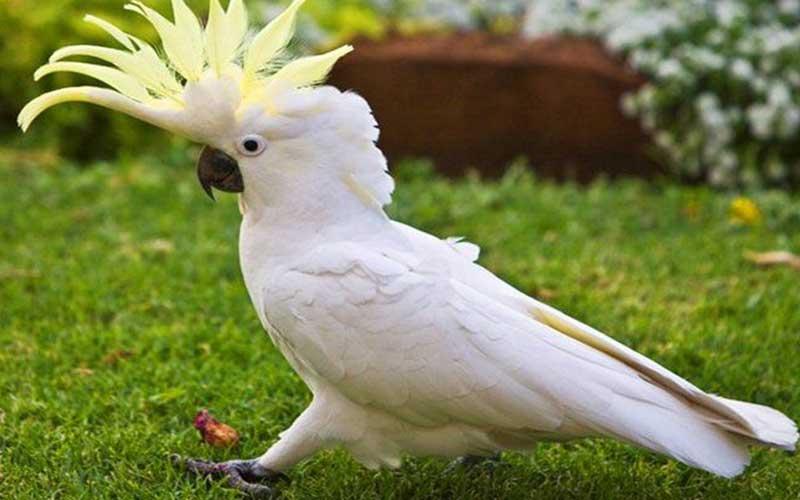 Bird-behavior