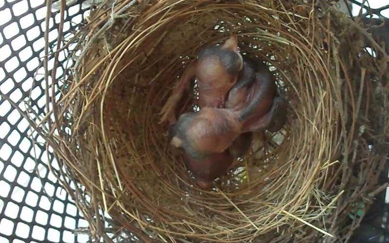 New-bornbird