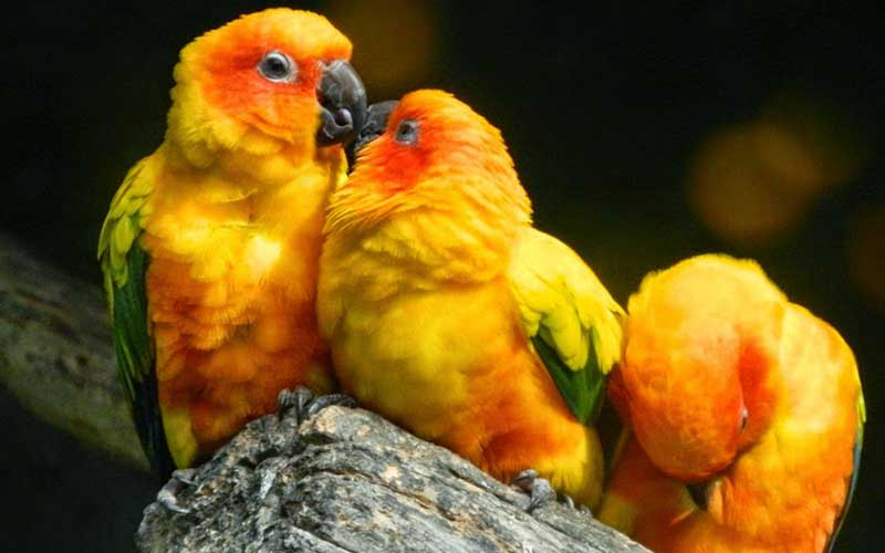 Popular-Birds