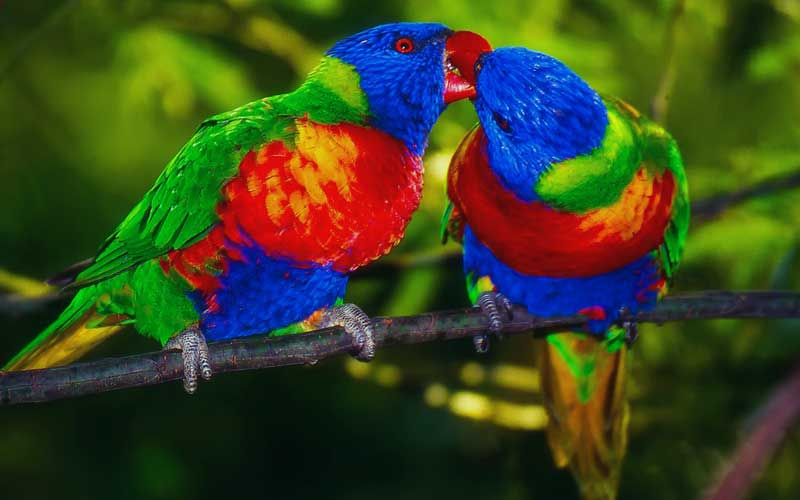 Green-cheeked-conures-news-site