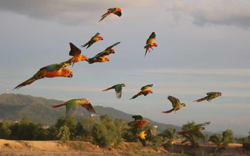 news-Independent-flying-bird-site